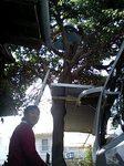 FMC美化委員会 木に登る圏外表示さん&mshrさん