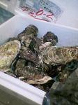 サロマ湖産牡蠣到着!