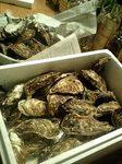 サロマ湖の牡蠣だぜぇぇ